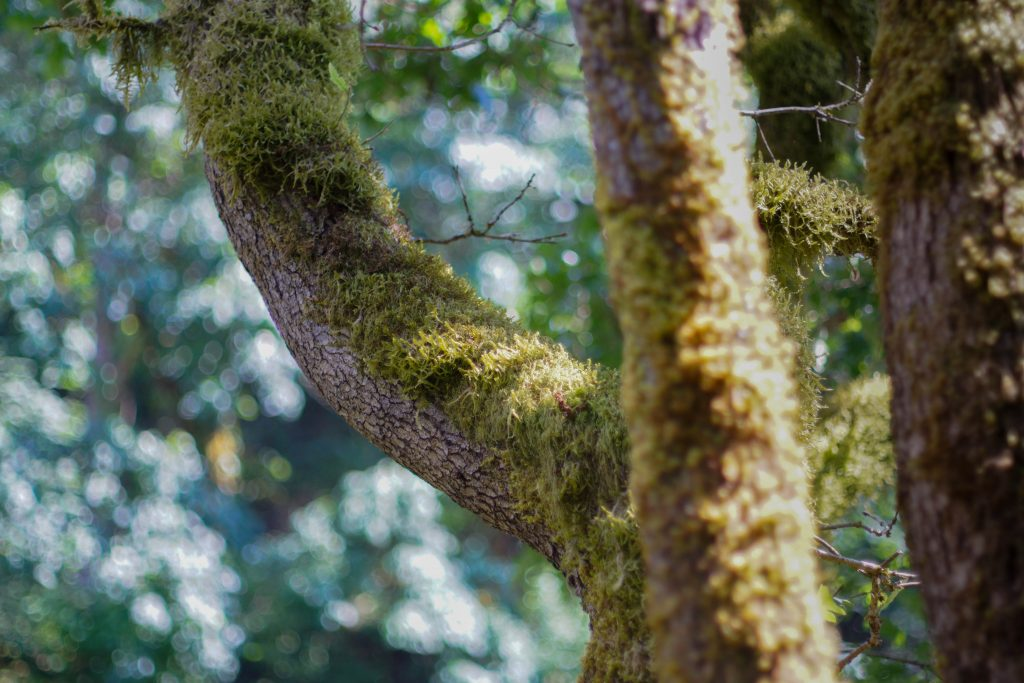 moss on tree near the washougal river